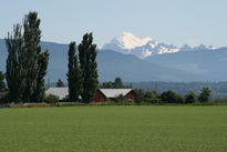 Skagit Valley Farmland, Mount Baker in distance
